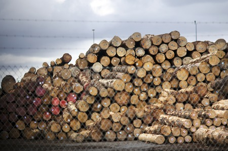 international sales: WHANGAREI,NZ - JULY 28:Pile of wood log for export in Northport on July 28 2013. Its New Zealand third largest export earner with international sales in excess of $4 billion. Editorial