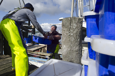 nz: MANGONUI, NZ - JULY 25:Fishermen carry boxes full of fresh fish in ice on July 25 2013.NZ exclusive economic zone covers 4.1 million km2,Its the 6th largest zone in the world and 14 times the size of NZ.