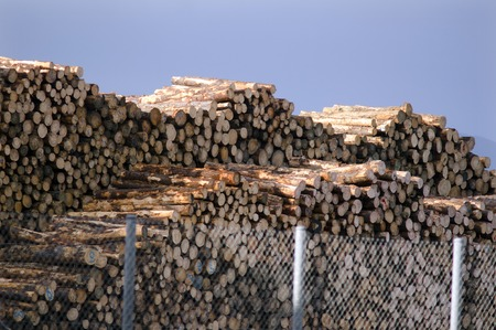 international sales: KAITAIA, NZ - JULY 08:Stacked wooden logs, tree trunks on July 08 2013.Its New Zealand third largest export earner with international sales in excess of $4 billion.