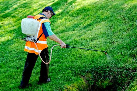 MANGONUE, NZ - 5 oktober: Arbeider sprays planten in de stad tuin op 5 oktober 2013.New-Zeeland is een van de landen met een snelle stijging van de bed bug parasitaire aandoeningen. Redactioneel