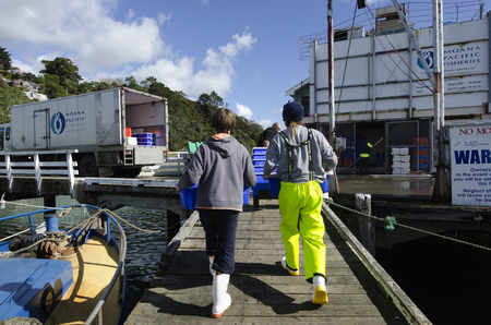 million fish: MANGONUI, NZ - JULY 25:Fishermen carry boxes full of fresh fish in ice on July 25 2013.NZ exclusive economic zone covers 4.1 million km2,Its the 6th largest zone in the world and 14 times the size of NZ.