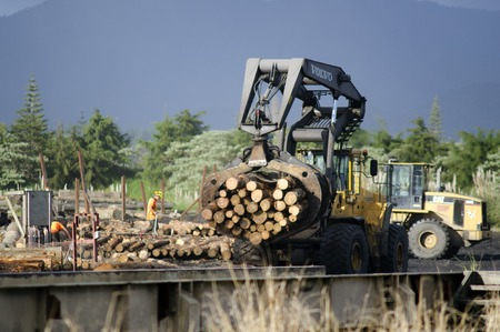 international sales: KAITAIA, NZ - JULY 08:Tractor carrying logs to wood chip pile on July 08 2013.Its New Zealand third largest export earner with international sales in excess of $4 billion. Editorial