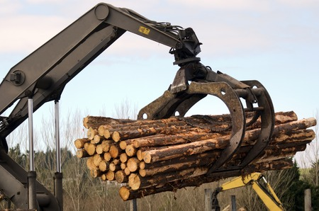 international sales: KAITAIA,NZ - JULY 30:Tractor carrying logs on July 30 2013. Its New Zealand third largest export earner with international sales in excess of $4 billion.