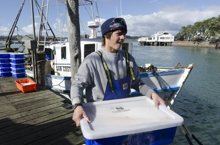 million fish: MANGONUI, NZ - JULY 25:Fisherman carry box full of fresh fish in ice on July 25 2013.NZ exclusive economic zone covers 4.1 million km2,Its the 6th largest zone in the world and 14 times the size of NZ.