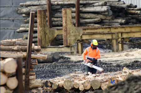 international sales: KAITAIA,NZ - JULY 30:Logging worker with chainsaw cut wood logs on July 30 2013. Its New Zealand third largest export earner with international sales in excess of $4 billion. Editorial