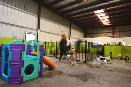 greatly: WELLINGTON - AUG 22 2014:Dog daycare.The popularity of such establishments in the world has grown greatly since the early 1990s, and arose out of the more traditional kennel industry. Editorial