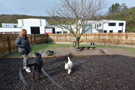 arose: WELLINGTON - AUG 22 2014:Dog daycare.The popularity of such establishments in the world has grown greatly since the early 1990s, and arose out of the more traditional kennel industry. Editorial