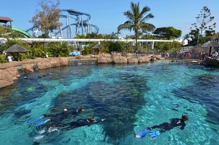 great barrier reef marine park: GOLD COAST, AUS -  NOV 06 2014:Visitors dive with sharks in Shark Bay touch pool at Sea World Gold Coast Australia.It is the worlds largest man-made lagoon system for sharks.