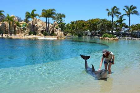 sea world: GOLD COAST, AUS -  NOV 06 2014:Woman interact with Dolphin in Sea World Gold Coast Australia.Its sea animals theme park that promote conservation education of sea and marine wildlife. Editorial