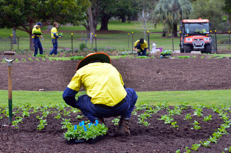 spading fork: BRISBANE, AUS - SEP 24 2014:Gardners planting plants at Brisbane City Botanic Gardens.The Gardens include many rare and unusual botanic species of plants, flowers and trees.