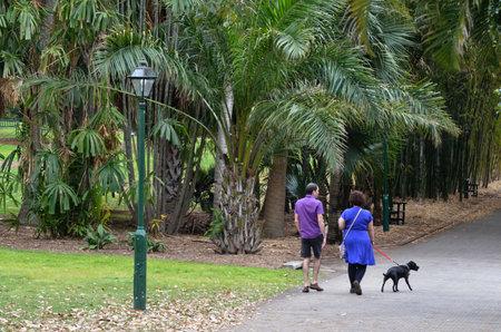 plants species: BRISBANE, AUS - 24 SETTEMBRE 2014: Coppia a spasso il cane a Brisbane City Botanic Gardens gardens.The include molte specie botaniche rare e insolite di piante, fiori e alberi.