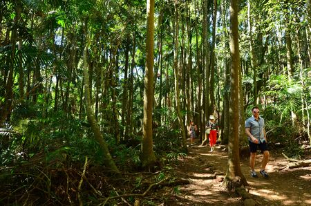 hinterland: GOLD COAST- OCT 20 2014:Visitors at Mount Tamborine in Queensland, Australia. Its the green heart of the Gold Coast Hinterland and home to the third oldest rainforest canopies national park in the world.