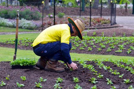 plants species: BRISBANE, AUS - 24 settembre 2014: Gardner piantare piante in Brisbane City Botanic Gardens gardens.The include molte rare e insolite specie botaniche di piante, fiori e alberi. Editoriali