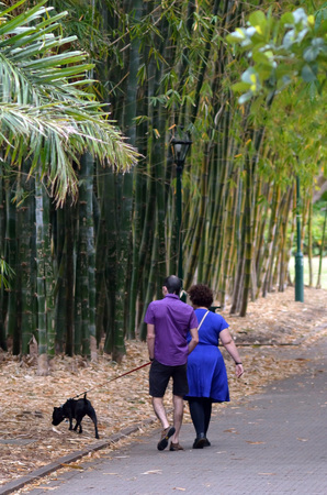 plants species: BRISBANE, AUS - SEP 24 2014:Couple walking a dog at Brisbane City Botanic Gardens.The Gardens include many rare and unusual botanic species of plants, flowers and trees.