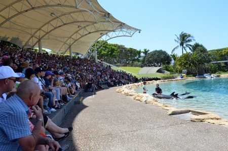 GOLD COAST, AUS -  NOV 06 2014:Dolphin show in Sea World Gold Coast Australia.Its sea animals theme park that promote conservation education, rescue and rehabilitation sick, injured or orphaned wildlife.