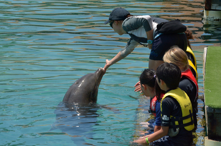 sea world: GOLD COAST, AUS -  NOV 06 2014:Visitors interact with Delphine in Sea World Gold Coast Australia.Its sea animals theme park that promote conservation education, rescue and rehabilitation sick, injured or orphaned wildlife. Editorial