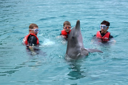 gold coast: GOLD COAST, AUS -  NOV 06 2014:Family interact with Dolphin in Sea World Gold Coast Australia.Its sea animals theme park that promote conservation education of sea and marine wildlife.