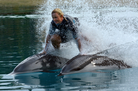 GOLD COAST, AUS -  NOV 11 2014:Dolphin show in Sea World Gold Coast Australia.Its sea animals theme park that promote conservation education of sea and marine wildlife.