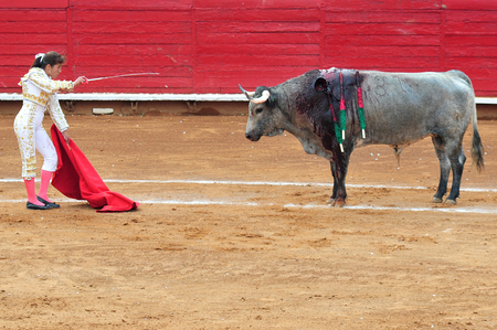 engaging: MEXICO CITY - March 1: A Matador and a bull are in a standoff before engaging in a bullfight battle on March 1, 2010 in Mexico city, Mexico. Editorial