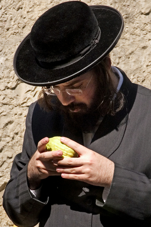 tabernacles: JERUSALEM - OCTOBER 20: Jewish ultra-orthodox man inspect Etrog at a four species market in Mea Shearim for the Jewish holiday of Sukkot on October 20 2005 in  in Jerusalem, Israel.