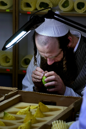tabernacles: JERUSALEM - OCTOBER 20: Jewish ultra-orthodox man inspect Etrogs at a four species market in Mea Shearim for the Jewish holiday of Sukkot on October 20 2005 in  in Jerusalem, Israel.