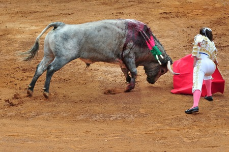 bullfight: A Matador and a bull are in a standoff before engaging in a bullfight battle in Mexico city. Editorial