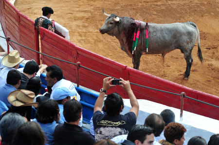bullfight: MEXICO CITY - March 1: A Matador and a bull are in a standoff before engaging in a bullfight battle on March 1, 2010 in Mexico city, Mexico. Editorial