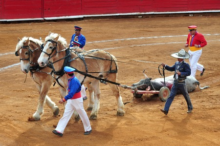 fighting bulls: MEXICO CITY - March 1: Matadors and horses remove a dead bull that died during a bullfight battle on March 1, 2010 in Mexico city, Mexico. Editorial