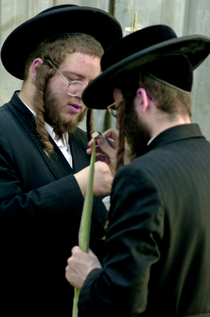 tabernacles: JERUSALEM - OCTOBER 20: Jewish ultra-orthodox peopel inspect Lulav at a four species market in Mea Shearim for the Jewish holiday of Sukkot on October 20 2005 in  in Jerusalem, Israel. Editorial