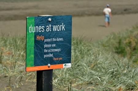silty: MURIWAI, NZL -  JAN 01 2015:Dune restoration Muriwai New Zealand.The sand dunes and coastal environments are one of the most important and most degraded landscapes in New Zealand. Editorial
