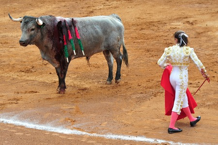 matadors: MEXICO CITY - MARCH 27: A Mexican woman Matador and a bull are in a standoff before engaging in a bullfight battle at the Plaza de Toros on March 20 2010, Mexico City.