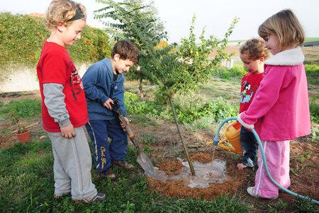 アシュケロン - 2 月 9 日: イスラエルの子供たち植物 2 月 9 日アシュケロン Tu Bishvat のユダヤ人の休日の間に、庭に新しいツリー 2007.It の木の新しい 報道画像