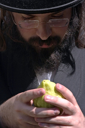 tabernacles: JERUSALEM - OCTOBER 20: A customer in Mea Shearim Four Species Market is examining an Etrog for Sukkot on Oct 20 2005 in Jerusalem, Israel.
