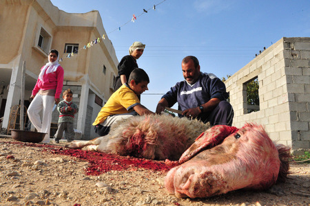 slaughter: LAKIYA,ISR - DEC 12:Muslims slaughter a lamb on Eid al-Adha, Dec 8 2008.The festival is celebrated by sacrificing a lamb or other animal and distributing the meat to relatives, friends, and the poor.