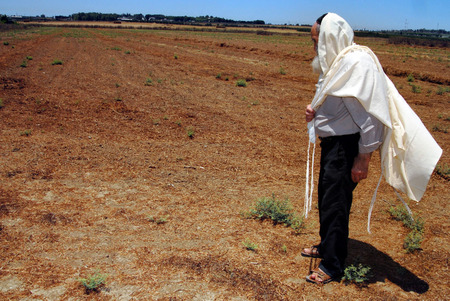 mandated: WESTERN NEGEV - JULY 12: An orthodox Jewish Rabbi prays in his field during Shmitta the Sabbatical Year on JULY 12 2007 in the western Negev, Israel. Its the seven-year agricultural cycle mandated by the Torah for the Land of Israel and still observed by Editorial