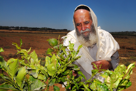 observed: WESTERN NEGEV - JULY 12: An orthodox Jewish Rabbi prays in his field during Shmitta the Sabbatical Year on JULY 12 2007 in the western Negev, Israel. Its the seven-year agricultural cycle mandated by the Torah for the Land of Israel and still observed by Editorial