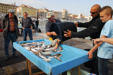 city fish market: MARSEILLE - MAY 09:Fresh fish at the fish market of Vieux-Port on May 09 2008 in Marseille,France.Marseille is Frances largest city on the Mediterranean coast and largest commercial port. Editorial