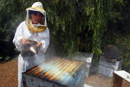 YAD MORDECHAI 4 september: Een Israëlische imker is het verzamelen van honing voor Rosh Hashana 2007 op dinsdag 4 september 2007 in kibboets Yad Mordechai, Israël.