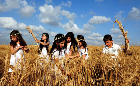 KIRYAT GAT - MAY 24: Israeli girls and boys in a wheat field celebrate the Jewish holiday Shavuot by checks the first harvest on May 24 2009 near Kyryat Gat, Israel.It's Judaism's third largest feast which commemorates the handing down of the five books o