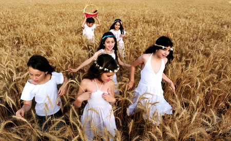 gat: KIRYAT GAT - MAY 24: Israeli girls and boys in a wheat field celebrate the Jewish holiday Shavuot by carry First Fruits of the harvest basket on May 24 2009 near Kyryat Gat, Israel.Its Judaisms third largest feast which commemorates the handing down of