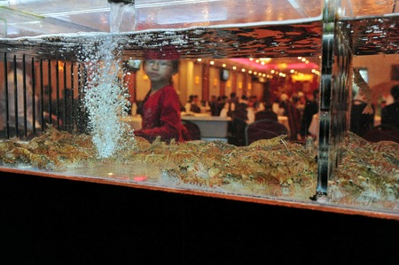 public aquarium: NY - OCT 10:Chines girl looks at aquarium full of Shrimps on October 10 2009 in Chinatown, New York.Seafood commonly causing food poisoning and public health issues around the world. Editorial