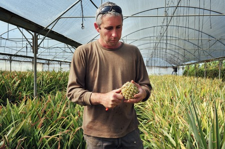 despite: REHOVOT - JANUARY 22: Israeli farmer observing his crops on January 22 2010 in Rehovot, Israel.Israel is a major exporter of fresh produce and a world-leader in agricultural technologies despite its climate.