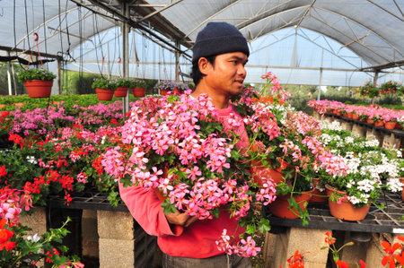 llegar tarde: REHOVOT - 22 de enero: Trabajadores que crecen las flores en un invernadero el 22 de enero de 2010 en Rehovot, flores Israel.Many puede cultivar en invernaderos a finales del invierno y principios de primavera, y luego trasplantado exterior como se calienta el clima.