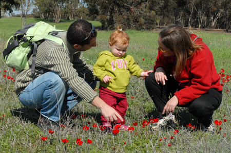 "red poppies on green field: WESTERN NEGEV - FEBUARY 02: Parents play with their toddler in a poppy field during Darom Adom – ""Scarlet South"" festival on Febuary 02 2010 in the western Negev, Israel. Editorial"