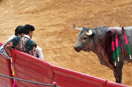 matadors: MEXICO CITY-MARCH 1:An unidentified Matadors and a bull during a bullfight battle on March 1, 2010 in Mexico city, Mexico.Today many people call to banned this sport as Its involved in animal torture.