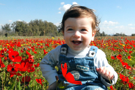 "red poppies on green field: WESTERN NEGEV - FEBRUARY 02:A toddler sits in a poppies field during Darom Adom – ""Scarlet South"" festival on February 02 2010 in the western Negev, Israel."