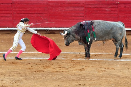 matador: MEXICO CITY - MARCH 1: An unidentified Matador and a bull are in a standoff before engaging in a bullfight battle on March 1, 2010 in Mexico city, Mexico.