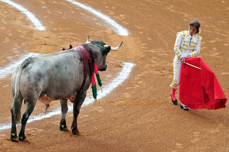 standoff: MEXICO CITY - MARCH 1: An unidentified Matador and a bull are in a standoff before engaging in a bullfight battle on March 1, 2010 in Mexico city, Mexico.