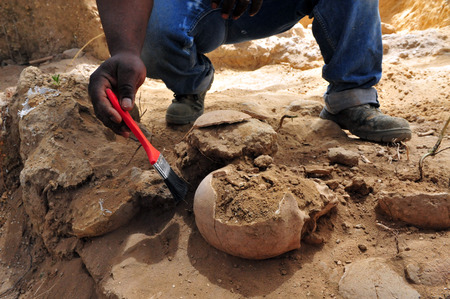 archaeologist: ASHHKELON, ISR - MAY 16: Archaeologist excavating Human Skull on May 16 2010.  Phrenologists thought they could determine a person's personality by the bumps on their head.