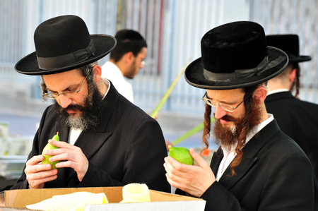 tabernacles: ASHDOD - OCTOBER 12 : Jewish ultra-orthodox  people inspect Etrogs at a four species market for the Jewish holiday of Sukkot on October 12 2011 in Ashdod,Israel.